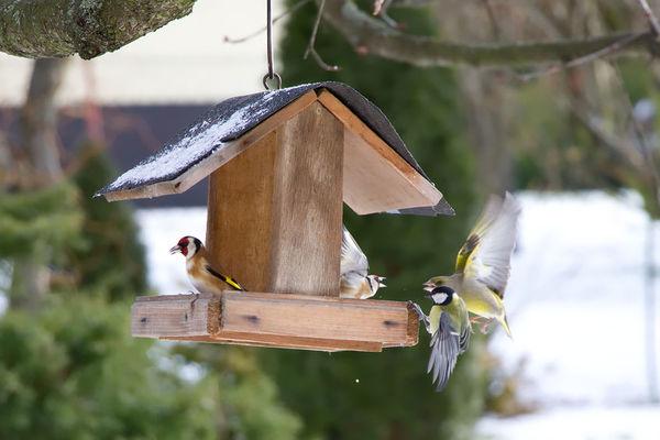Krmljenje ptic pozimi