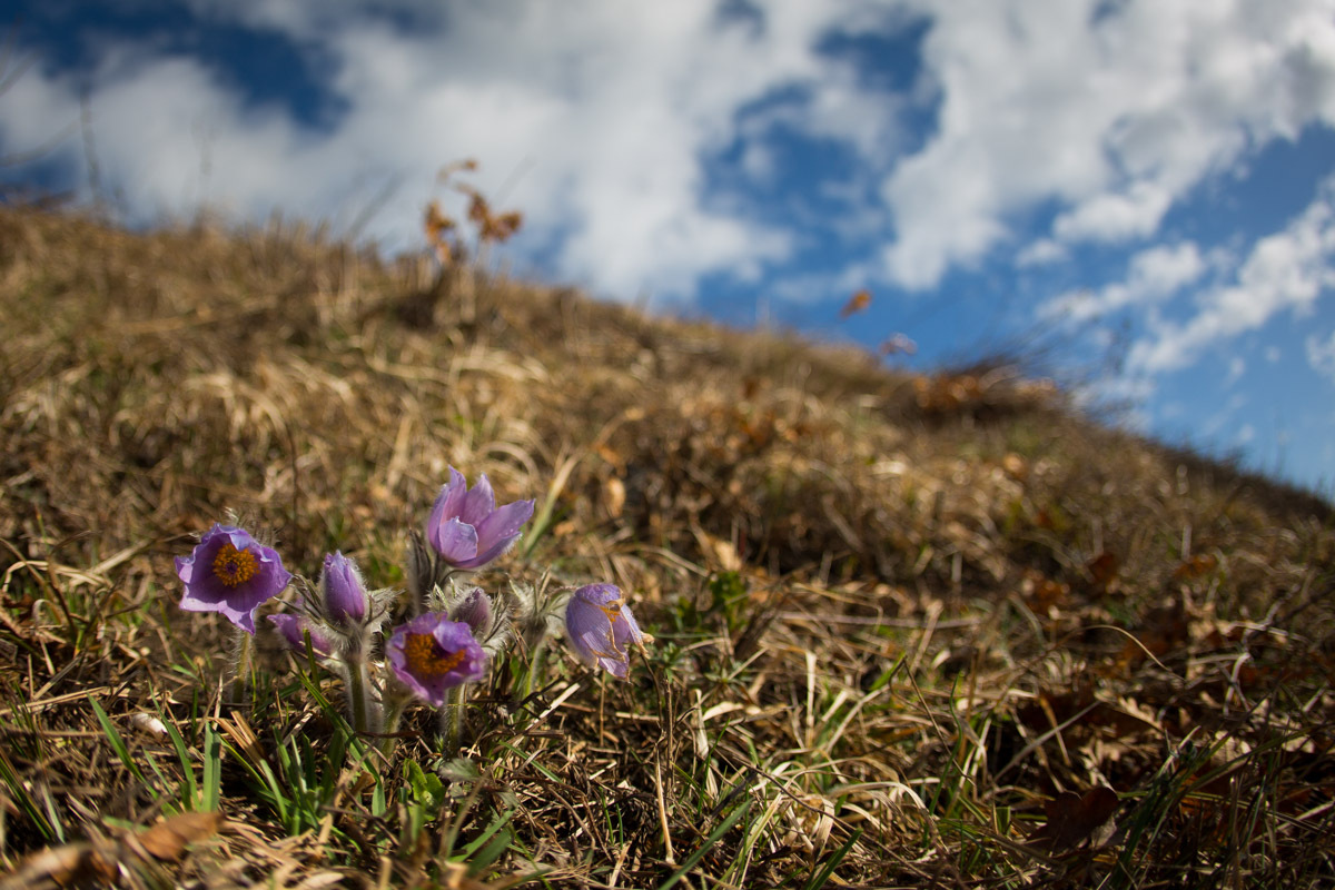 V Planinski zvezi Slovenije opozarjajo na uničevanje gorskih rastlin