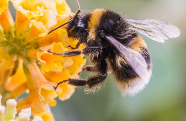 Danes praznujejo čebele