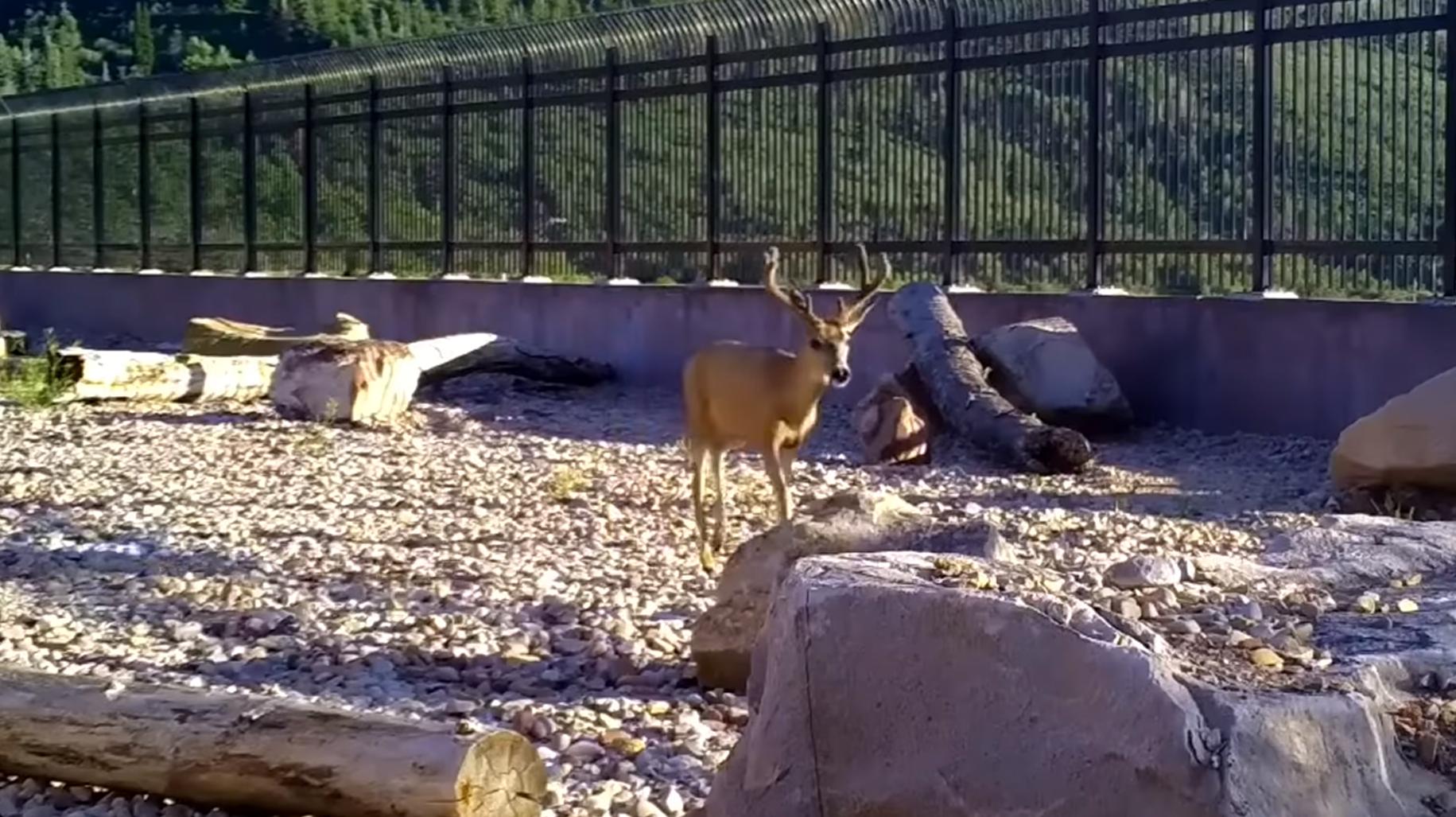 [VIDEO] Primer dobre prakse: Ljudje in živali lahko sobivajo v sožitju